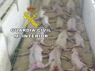 Espanha Almeria matam leitoes H