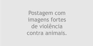 FIXAS imagens fortes 320px