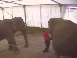Franca agride elefantes circo H