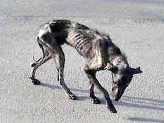 Grecia cachorro lar morrer H