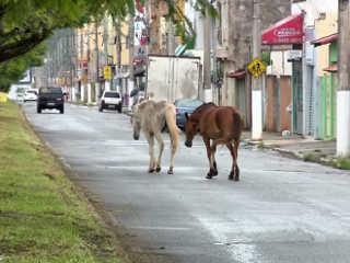 MG PousoAlegre cavalos soltos H