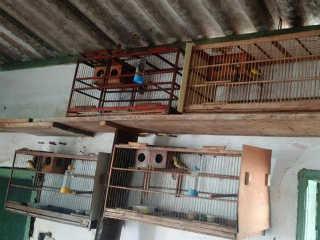 Polícia Ambiental prende homem que mantinha aves em cativeiro em Uberlândia, MG