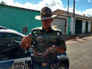 Polícia de Meio Ambiente captura jiboia e aves em Uberlândia, MG