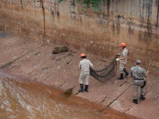 Acuada, capivara pula em córrego, fica ferida e foge durante resgate em Campo Grande, MS