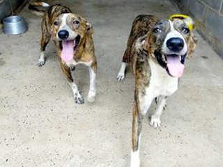 MT Cuiaba prefeitura liminar tratar animais H