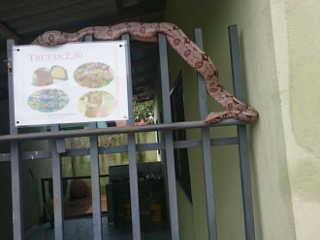 MT TangaraDaSerra cobra pendurada H