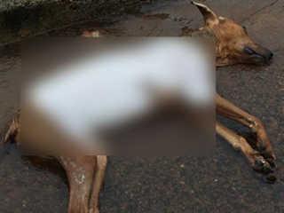 Cachorro é encontrado morto com sinais de tortura em Pontes e Lacerda, MT