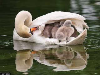 O jeito que cada mãe carrega seus bebês