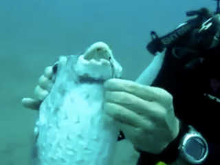 Mergulhador peixe anzol boca H