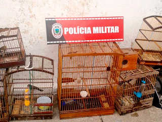 Polícia apreende aves silvestres em feira em João Pessoa, PB