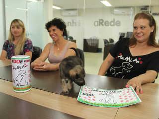 Grupo de proteção animal espalha 'cofrinhos' pela cidade de Ponta Grossa, PR