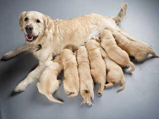 Ribeirão Claro (PR) amplia castração de cadelas e estuda cadastro de tutores