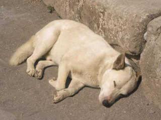 Peru lei contra maus-tratos animais H