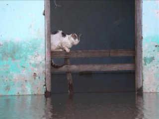 Ativistas pedem ao governo de Porto Rico mais proteção para os animais