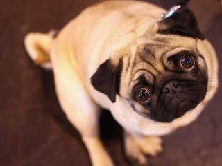 Portugal OLX peticao venda animais H