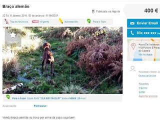 Portugal peticao troca animais coisas2 H