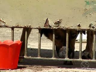 RJ BarraMansa cachorro isolado quintal H