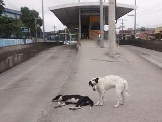 Consórcio BRT faz campanha contra abandono de animais nas ruas do RJ