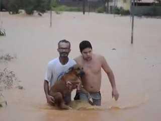 Homens se arriscam em correnteza e salvam cachorros de enchente, em RO