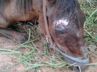 RS Gravatai cavalo atear fogo H