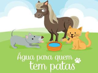Vila dos Peludos lança campanha 'Água para quem tem patas' em Porto Alegre, RS