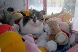 SIBERIA gato toy2 H