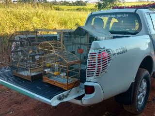 Polícia Militar Ambiental apreende pássaros em cativeiro e na soltura flagra jovem caçando, em Bauru, SP