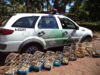 Polícia Ambiental autua morador por ter pássaros em cativeiro, em Jaú, SP