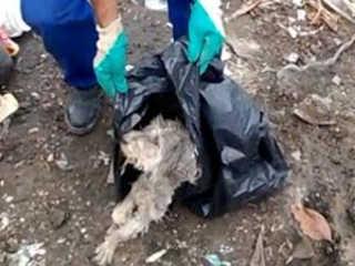 Coletores encontram cachorro em saco de lixo em Lorena, SP; veja resgate