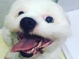 SP Mogi cao pet shop morto H