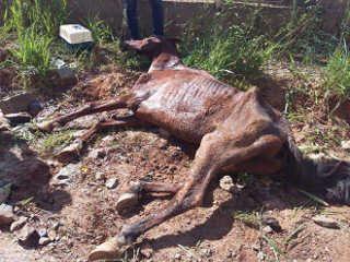 SP PilarDoSul cavalo morre H