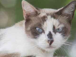 SP RioPreto voluntarios abandono gatos2 H