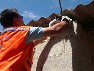 Gato é resgatado depois de ficar dois dias preso em telhado de São Roque, SP