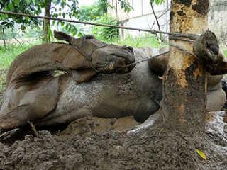 Cavalo é encontrado morto amarrado a árvore em Leme, SP, afirma a GCM