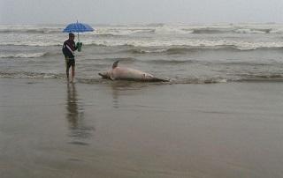 SP mongagua csm golfinho prakia mongagua foto leitor via whatsapp 5d276cd44a H