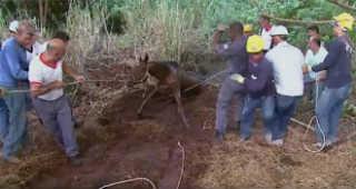 Bombeiros resgatam égua que caiu no buraco em Ribeirão Preto, SP