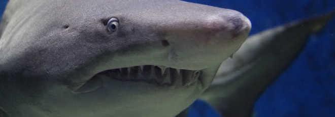 Tecnologia inovadora de realidade virtual pode acabar com o cativeiro para animais marinhos