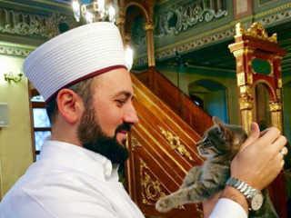 Turquia Istambul religioso mesquita gatos H