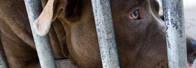Ativistas lutam contra ONG que quer matar 21 cães no Canadá