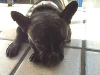 Cachorro é esquecido por quatro horas em carro de pet shop e morre na Serra, ES