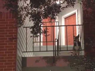 Cão espera 2 semanas por tutor morto e comove vizinhos nos EUA