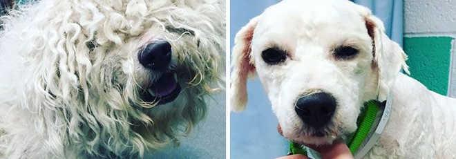 Homem tosa cães idosos e abandonados e dá nova vida a eles