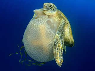 Fotos sensacionais revelam as vidas secretas das criaturas marinhas