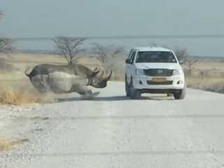 Vídeo mostra momento em que rinoceronte ataca carro na Namíbia