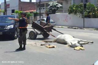 PE Jaboatao atropela cavalo H
