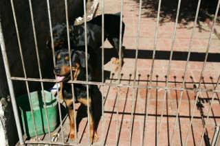 Curitiba (PR) tem 270 reclamações de maus-tratos contra animais por mês