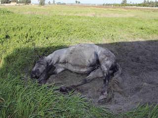 Portugal Almeirim maus-tratos animal H