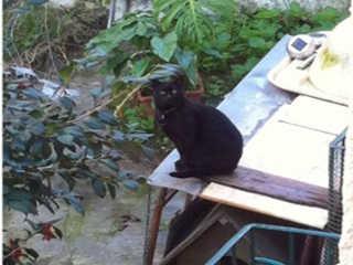 Portugal: Gato preso em quintal é crime? A quem devo queixar-me?