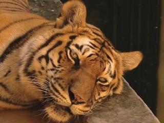 Animais silvestres resgatados podem ser 'adotados' em Santa Maria, RS