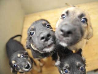 Centro de Proteção Animal de Blumenau (SC) está superlotado